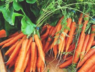 carrotte3